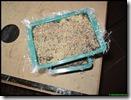 Bakjes met kiwi zaad