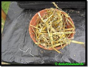 Nestplaats oorwormen