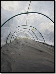 Mini tunnel-serre voor de stekken