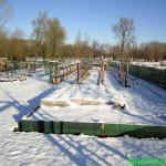 Aardbeien in de sneeuw