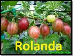 Kruisbes 'Rolanda'